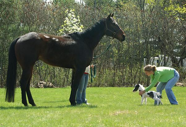 Đốn tim vì Einstein - chú ngựa bé nhất thế giới, nhỏ hơn cả đứa trẻ 5 tuổi - Ảnh 1.