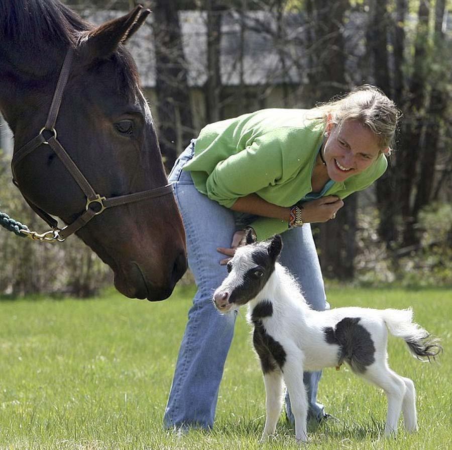 Đốn tim vì Einstein - chú ngựa bé nhất thế giới, nhỏ hơn cả đứa trẻ 5 tuổi - Ảnh 2.