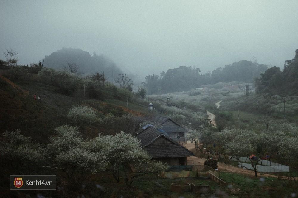 Những ngày cận Tết, hoa mận trắng nở rộ Mộc Châu đẹp đến mê mẩn - Ảnh 14.