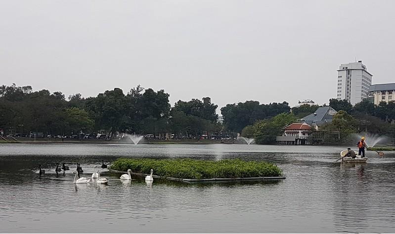 Xem xét lắp camera ở hồ Thiền Quang để bảo vệ thiên nga 1