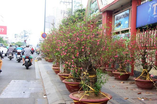 30 triệu đồng một gốc đào, người Sài Gòn vẫn hào hứng mua về chơi Tết - Ảnh 1.