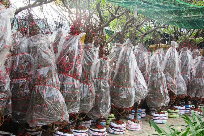 30 triệu đồng một gốc đào, người Sài Gòn vẫn hào hứng mua về chơi Tết - Ảnh 9.
