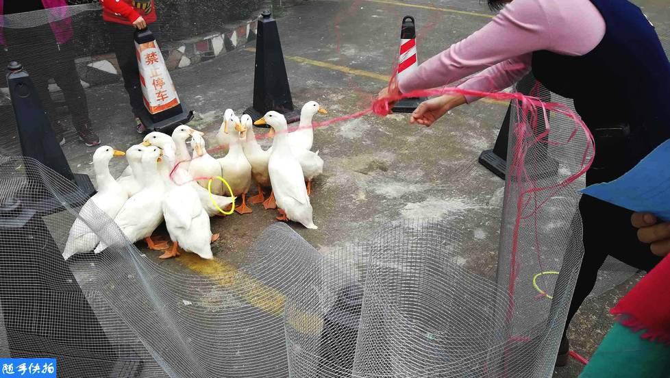 Những trò khó đỡ trong tiệc tất niên ở Trung Quốc: Thi ăn chanh chua, bắt vịt mang về, sếp vung tay ném tiền - Ảnh 2.