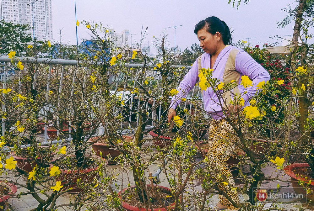 Người bán hoa Tết tốn nhiều công chăm sóc và đặt cược cả vào đợt bán này.