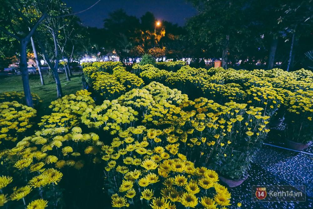 Hoa cúc khoe sắc rực rỡ trong đêm nhưng khá ít người mua.