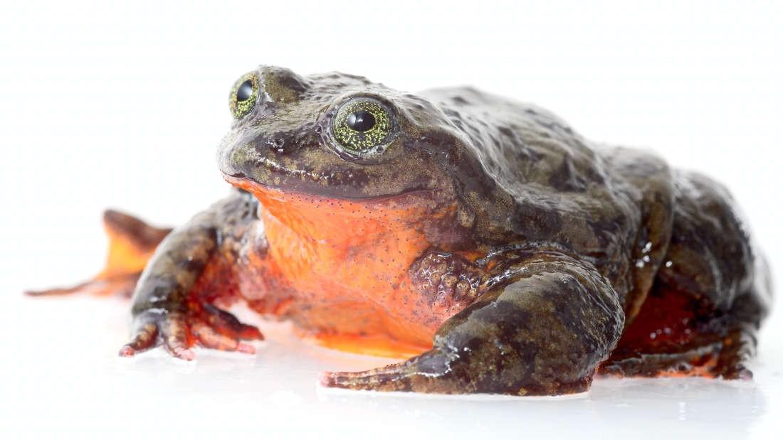 """Valentine đến rồi, bạn có muốn hẹn hò với """"hoàng tử ếch"""" chứ ? - Ảnh 1."""