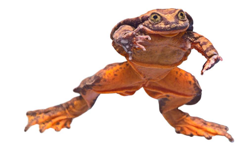 """Valentine đến rồi, bạn có muốn hẹn hò với """"hoàng tử ếch"""" chứ ? - Ảnh 3."""