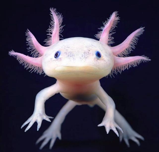 8 sinh vật kỳ quặc tưởng chừng như chúng không thuộc về hành tinh này - Ảnh 1.