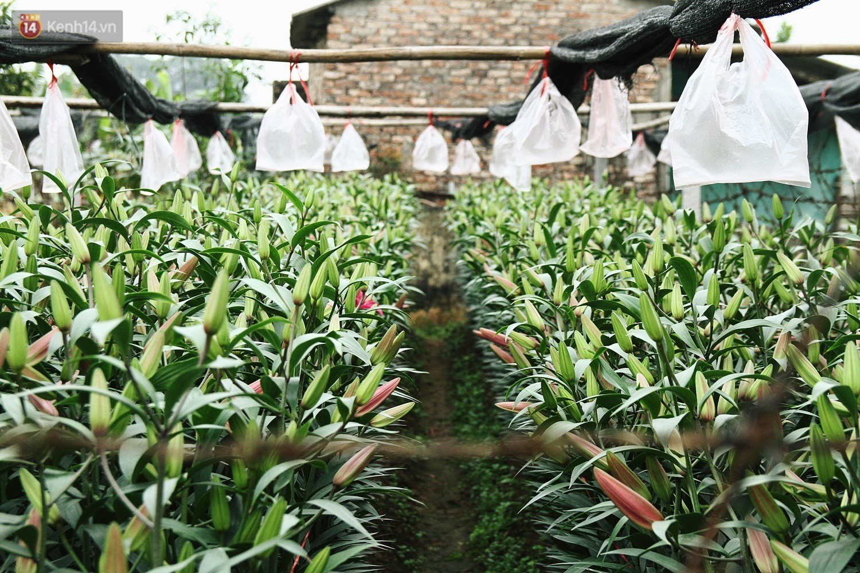 Làng Tây Tựu nhộn nhịp tiếng cười những ngày giáp Tết, người nông dân hy vọng vào một mùa vụ sung túc - Ảnh 5.