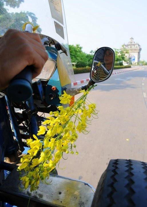 Tết Việt Nam thì không thể thiếu đào mai, còn người dân châu Á trưng hoa gì trong năm mới để có nhiều may mắn tài lộc? - Ảnh 3.