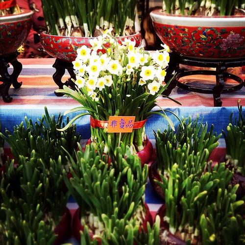 Tết Việt Nam thì không thể thiếu đào mai, còn người dân châu Á trưng hoa gì trong năm mới để có nhiều may mắn tài lộc? - Ảnh 9.