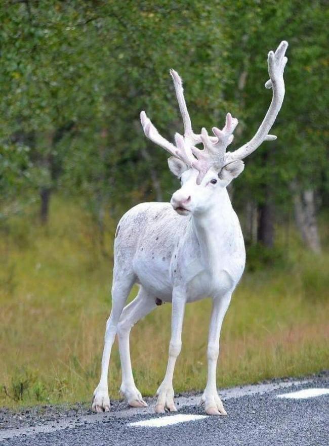 18 động vật bất bình thường khiến bạn cứ ngạc nhiên mãi thôi - Ảnh 19.