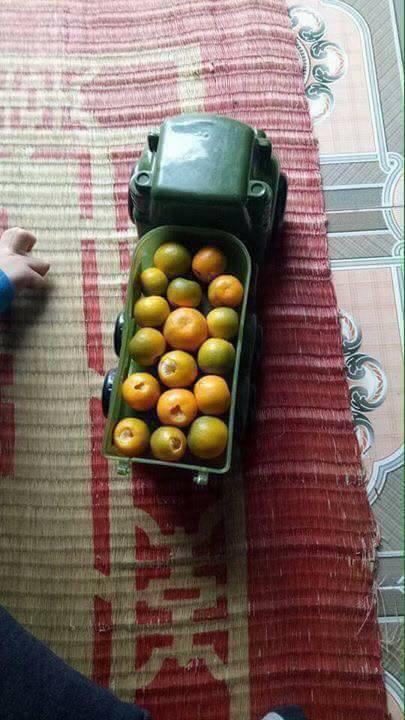 Nỗi lòng người bố mua cây quất đẹp chơi Tết, vừa kịp đăng Facebook khoe thì con gái vặt sạch quả - Ảnh 3.