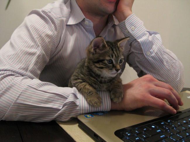 18 boss chó mèo có hành động thông minh y chang con sen - Ảnh 31.