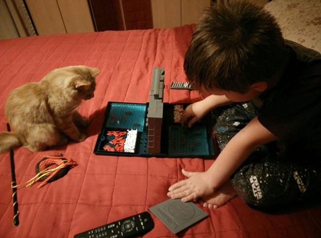 18 boss chó mèo có hành động thông minh y chang con sen - Ảnh 9.