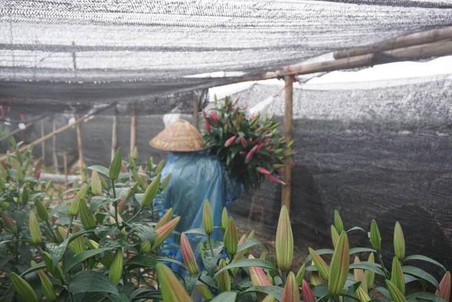Hà Nội: Làng hoa Tây Tựu nở trái mùa, nông dân khóc ròng vì cắm nhà trả nợ - Ảnh 2.