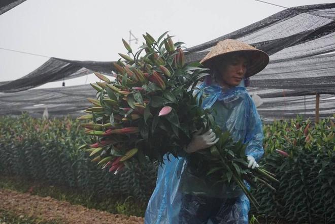 Hà Nội: Làng hoa Tây Tựu nở trái mùa, nông dân khóc ròng vì cắm nhà trả nợ - Ảnh 3.