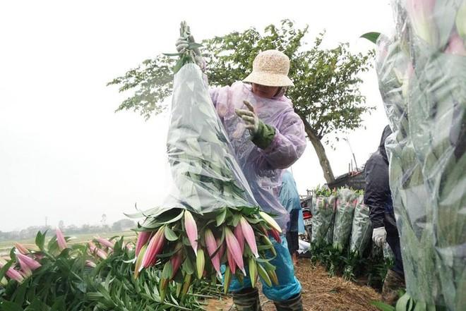 Hà Nội: Làng hoa Tây Tựu nở trái mùa, nông dân khóc ròng vì cắm nhà trả nợ - Ảnh 9.