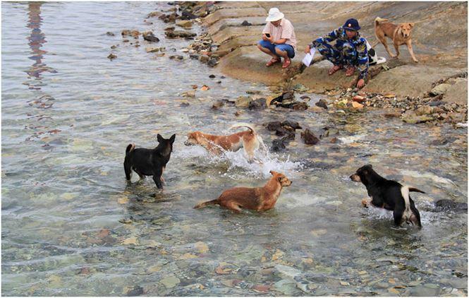 Chú chó tên Sơn Tùng nổi tiếng ở Trường Sa - Ảnh 1.