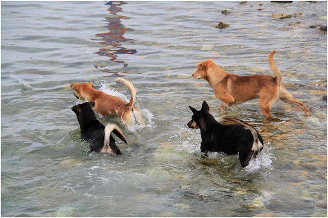 Chú chó tên Sơn Tùng nổi tiếng ở Trường Sa - Ảnh 2.