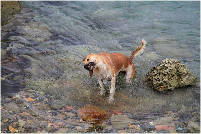 Chú chó tên Sơn Tùng nổi tiếng ở Trường Sa - Ảnh 6.