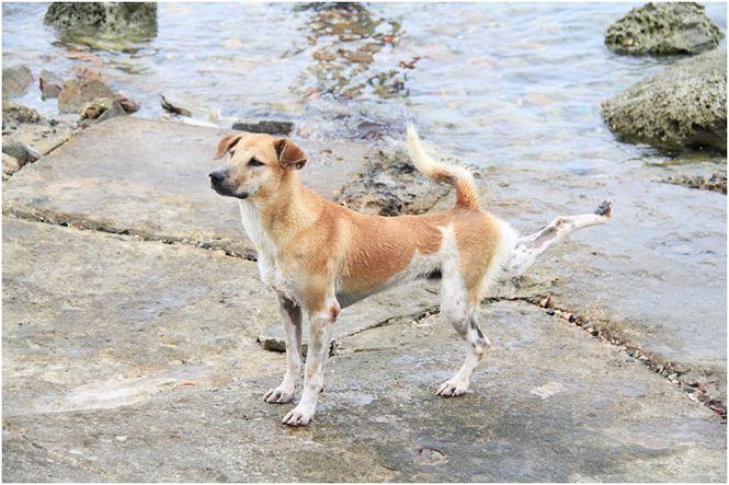 Chú chó tên Sơn Tùng nổi tiếng ở Trường Sa - Ảnh 7.