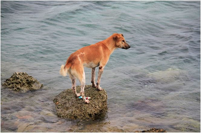 Chú chó tên Sơn Tùng nổi tiếng ở Trường Sa - Ảnh 10.