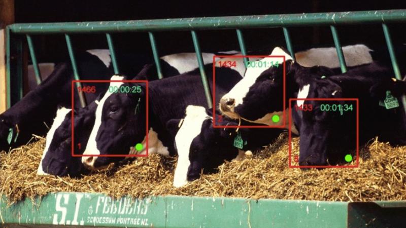 Xuất hiện công nghệ nhận diện gia súc, vượt mặt cả Face ID của iPhone X - Ảnh 1.