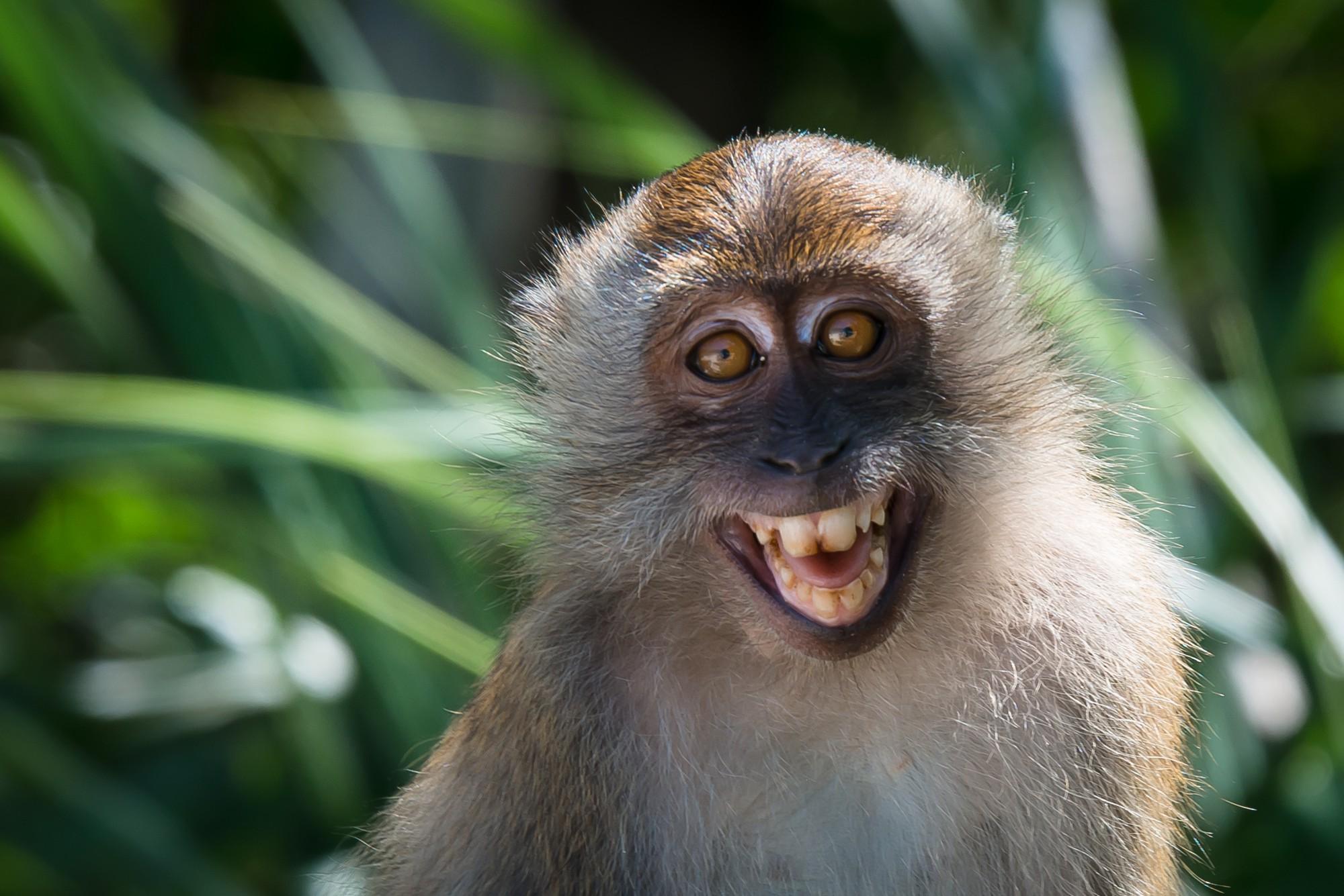 16 điệu cười không thấy mặt trời đâu của các loài động vật - Ảnh 1.