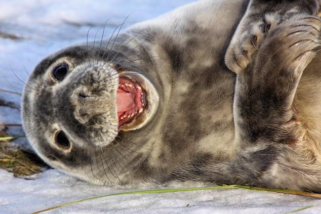 16 điệu cười không thấy mặt trời đâu của các loài động vật - Ảnh 15.