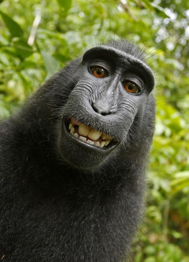 16 điệu cười không thấy mặt trời đâu của các loài động vật - Ảnh 21.