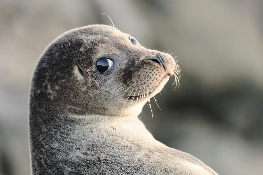 16 điệu cười không thấy mặt trời đâu của các loài động vật - Ảnh 23.