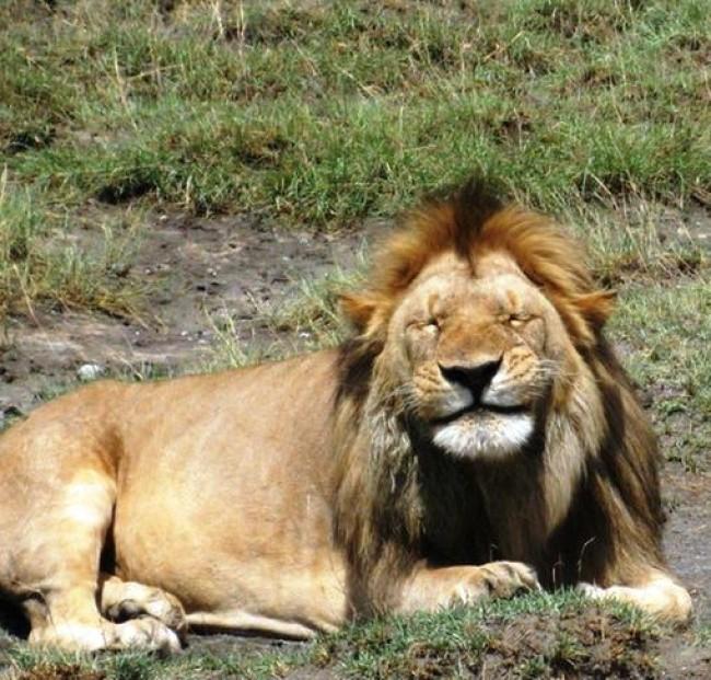 16 điệu cười không thấy mặt trời đâu của các loài động vật - Ảnh 25.