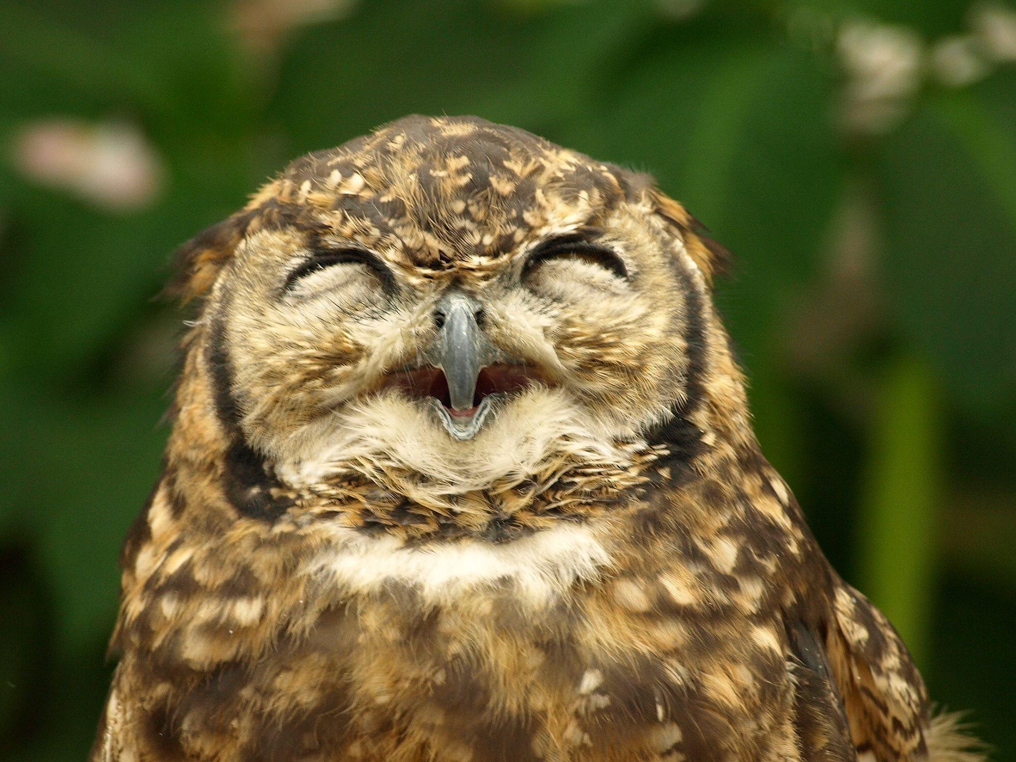 16 điệu cười không thấy mặt trời đâu của các loài động vật - Ảnh 5.