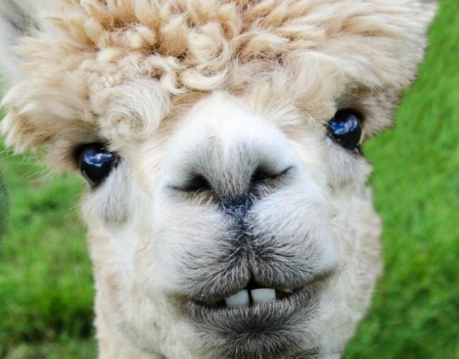 16 điệu cười không thấy mặt trời đâu của các loài động vật - Ảnh 7.