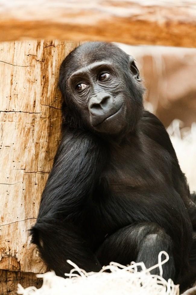 16 điệu cười không thấy mặt trời đâu của các loài động vật - Ảnh 13.
