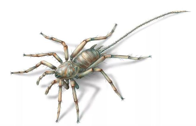 Nhện thường đã đáng sợ, nhưng loài nhện cổ đại này sẽ khiến nhiều người phải chết khiếp - Ảnh 1.