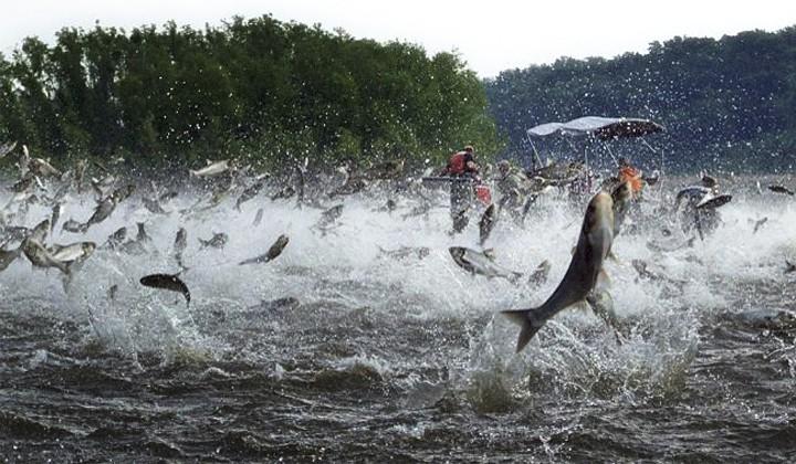 Năm nào cũng đi thả cá ngày Ông Táo, nhưng bạn đã biết những điểm đặc biệt này của cá chép chưa? - Ảnh 6.