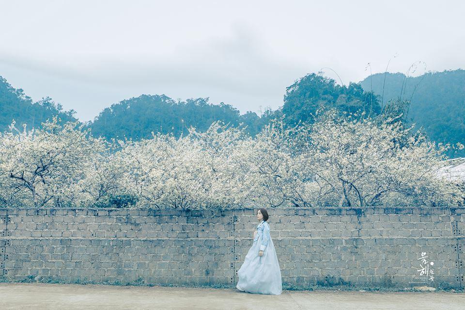 Mùa hoa mận năm ấy - Bộ ảnh khiến ai xem xong cũng nghĩ mãi về Mộc Châu - Ảnh 1.