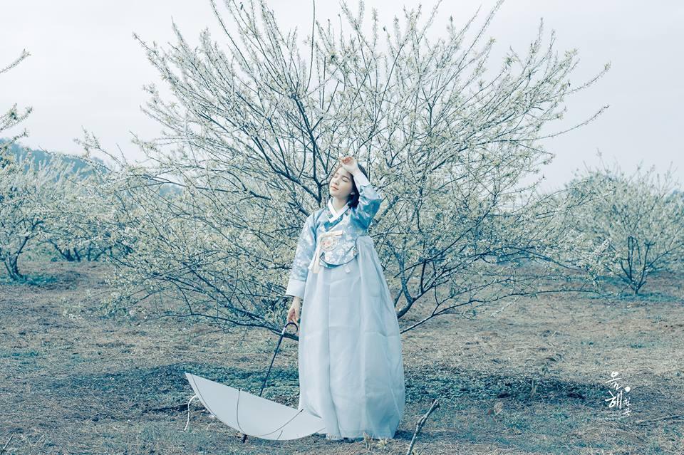 Mùa hoa mận năm ấy - Bộ ảnh khiến ai xem xong cũng nghĩ mãi về Mộc Châu - Ảnh 3.