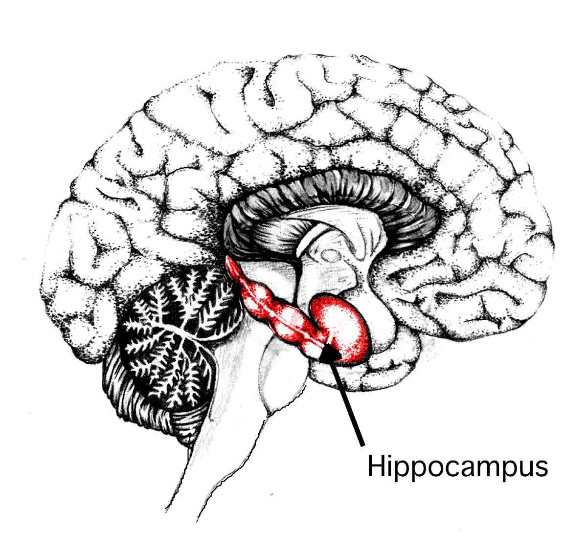 Nhà nghiên cứu cảnh báo: nhiều người làm việc trong môi trường này khiến não hoạt động kém hiệu quả hơn - Ảnh 2.