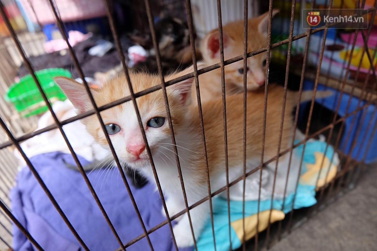 Chuyện cô giúp việc, dì bán vải chung sức cứu giúp hàng nghìn chú mèo suốt 17 năm ở Sài Gòn - Ảnh 9.