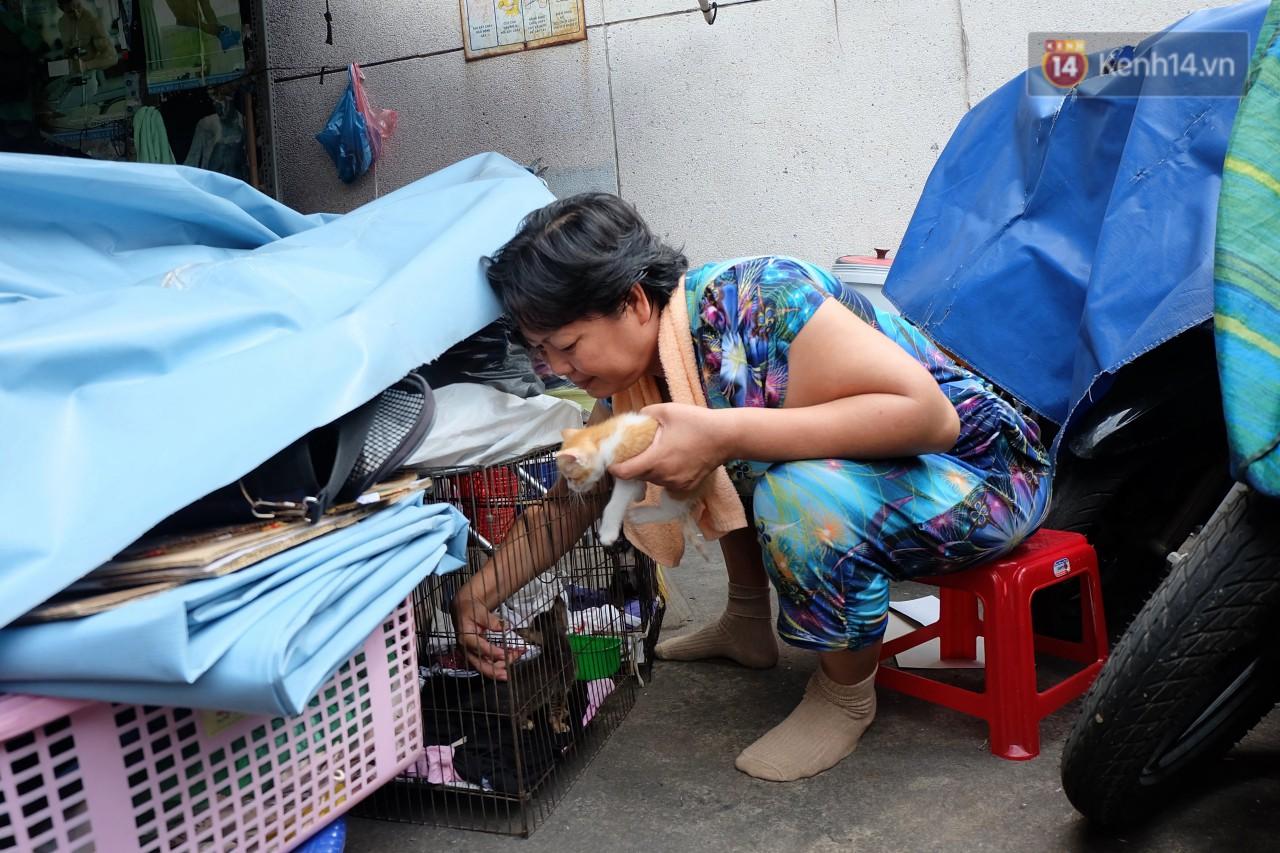 Chuyện cô giúp việc, dì bán vải chung sức cứu giúp hàng nghìn chú mèo suốt 17 năm ở Sài Gòn - Ảnh 10.