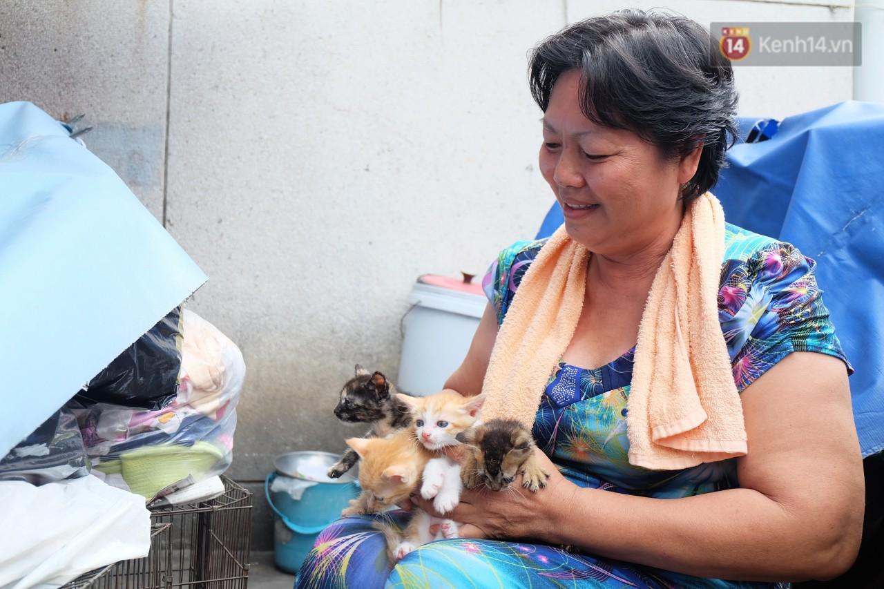 Chuyện cô giúp việc, dì bán vải chung sức cứu giúp hàng nghìn chú mèo suốt 17 năm ở Sài Gòn - Ảnh 7.