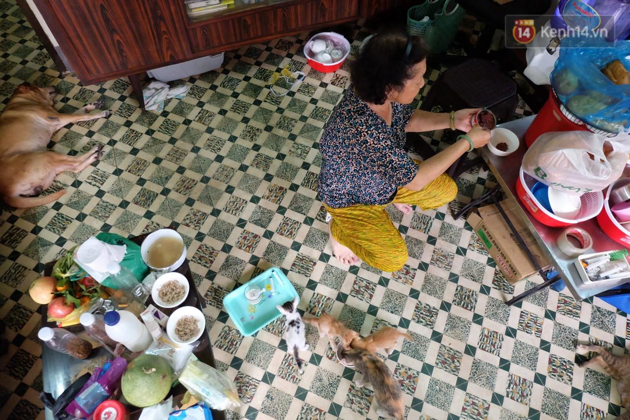 Chuyện cô giúp việc, dì bán vải chung sức cứu giúp hàng nghìn chú mèo suốt 17 năm ở Sài Gòn - Ảnh 1.
