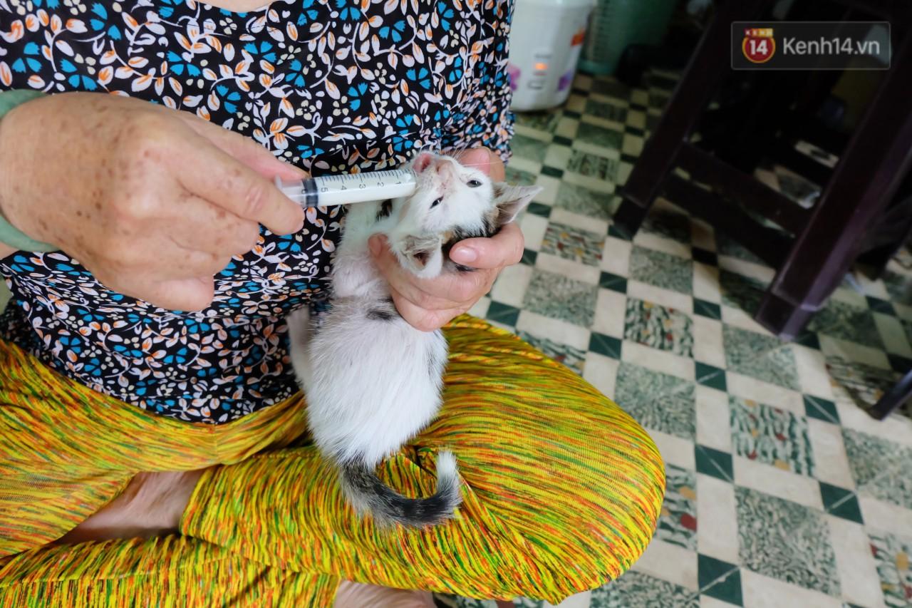 Chuyện cô giúp việc, dì bán vải chung sức cứu giúp hàng nghìn chú mèo suốt 17 năm ở Sài Gòn - Ảnh 5.