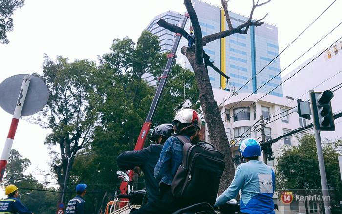 Chùm ảnh: Người Sài Gòn đặt hoa hồng trên gốc những hàng cây xanh bị đốn hạ ở đuờng Tôn Đức Thắng - Ảnh 6.
