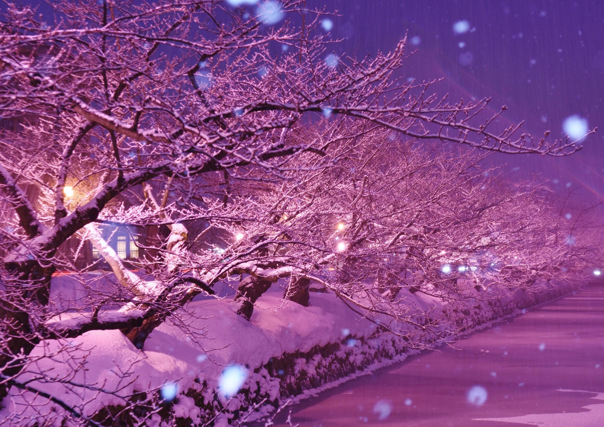 Người dân Nhật ngỡ ngàng chiêm ngưỡng những bông hoa anh đào băng tuyết trong thời tiết lạnh giá kéo dài - Ảnh 9.