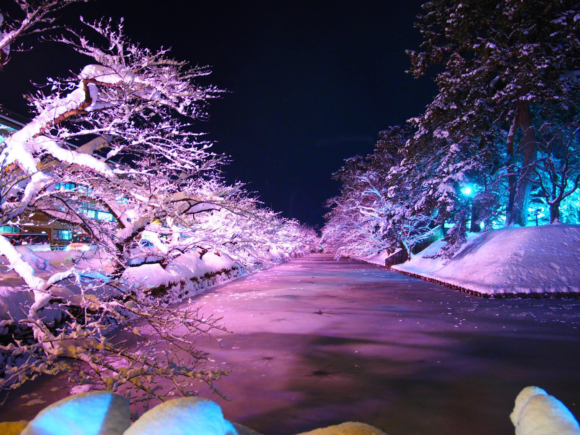 Người dân Nhật ngỡ ngàng chiêm ngưỡng những bông hoa anh đào băng tuyết trong thời tiết lạnh giá kéo dài - Ảnh 7.