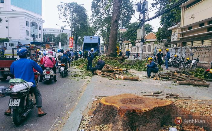 Chùm ảnh: Người Sài Gòn đặt hoa hồng trên gốc những hàng cây xanh bị đốn hạ ở đuờng Tôn Đức Thắng - Ảnh 2.